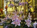Flowers for Confucius